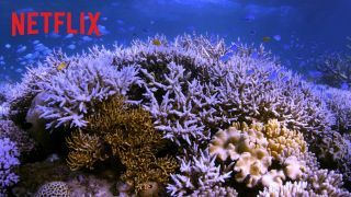 Chasing Coral - 100 procent na Rotten Tomatoes