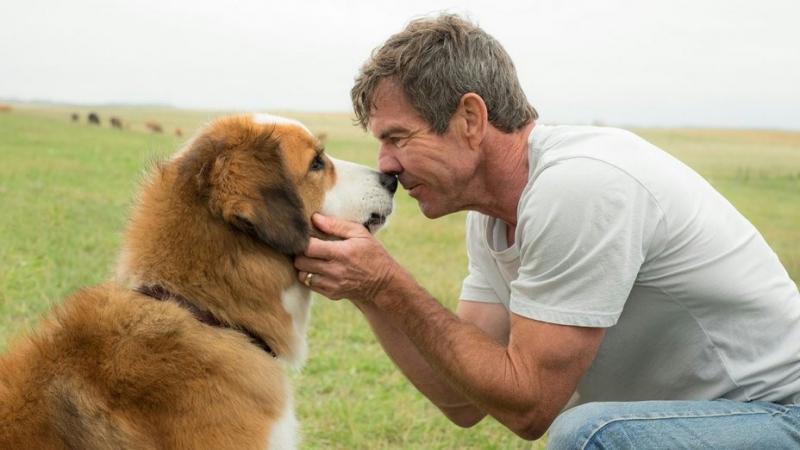 Afera z filmem Był sobie pies ustawiona? Są wyniki śledztwa