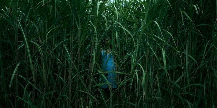 W wysokiej trawie - zwiastun filmu na podstawie prozy Stephena Kinga