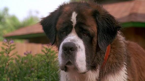 10 filmów z psami w roli głównej