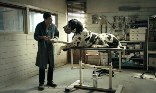 Dogman – recenzja filmu