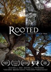 Tajemnice afrykańskich drzew